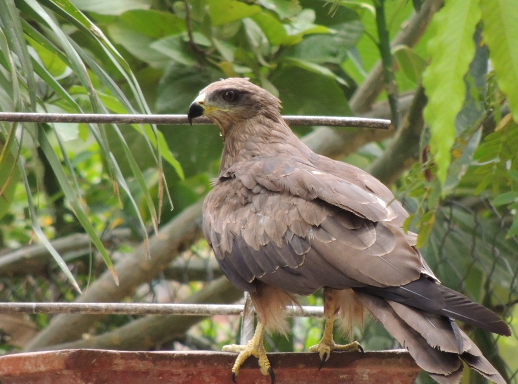 Birds Of Gujarat, Large no of bird collection and species in gujarat